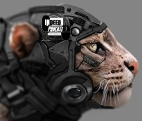 Indeed_robo_cat